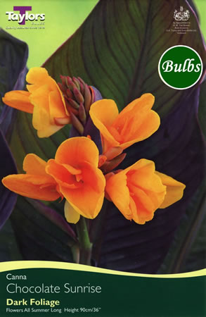 Image of Chocolate Sunrise Canna Bulb