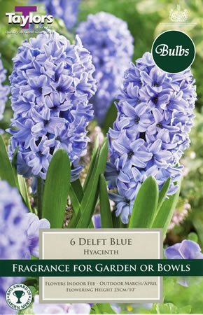 Image of Hyacinth Bulbs Delft Blue
