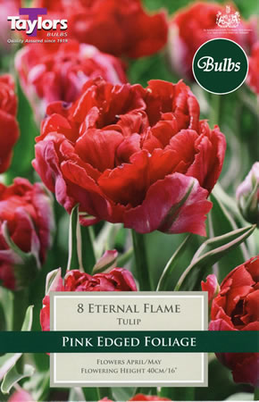 Image of Eternal Flame - New & Spectacular Tulip Bulbs