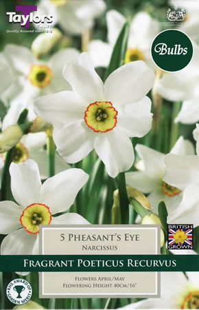 Image of Daffodil Pheasants Eye Bulbs - Poeticus
