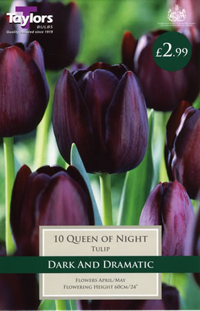 Image of Queen of the Night - Cottage Garden Tulip Bulb
