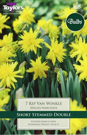 Image of Daffodil Rip Van Winkle Bulbs - Species Narcissi