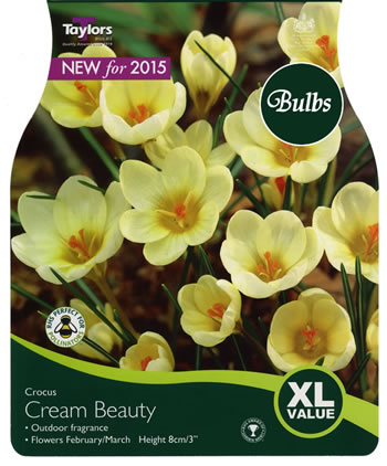 Image of Crocus Cream Beauty Bulbs - Xtra Large Value Crocus Range