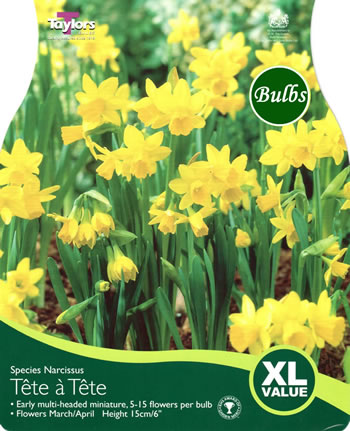 narcissi tete a tete bulbs xl value range garden4less uk shop. Black Bedroom Furniture Sets. Home Design Ideas
