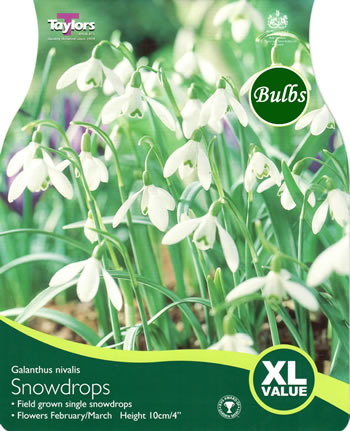 Image of Snowdrops Galanthus Nivalis - XL Value Range