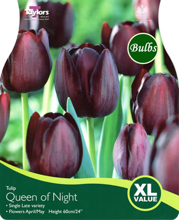 Image of Tulip Queen Of The Night Bulbs - XL Value Range