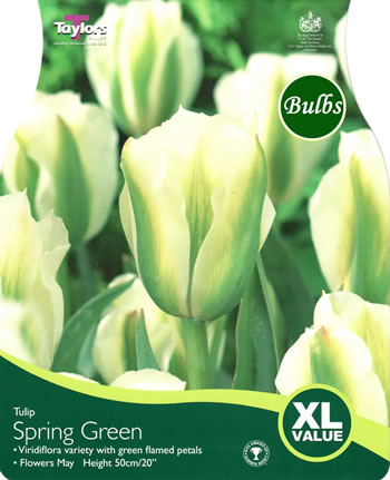 Image of Tulip Spring Green Bulbs - XL Value Range