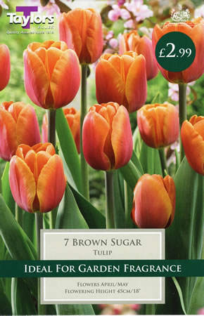 Image of Brown Sugar - Cottage Garden Tulip Bulb