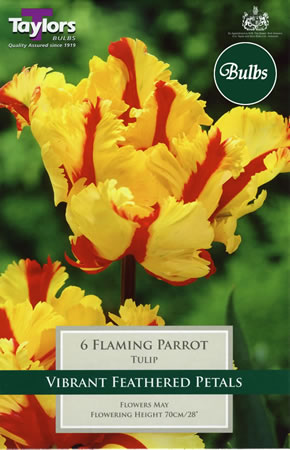 Image of Flaming Parrot - Parrot Tulip Bulbs