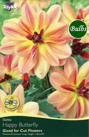Image of Happy Butterfly Dahlia Tuber