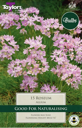 Image of Allium Roseum Bulbs