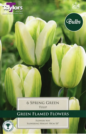 Image of Spring Green Tulip Bulbs