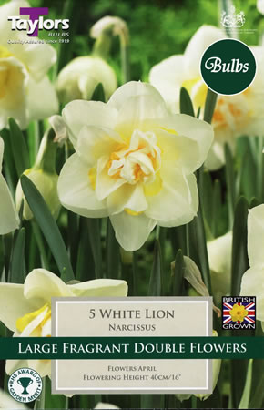 Image of Daffodil White Lion Bulbs - Species Narcissi
