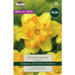 Small Image of Daffodil Blazing Starlet Bulbs -Butterfly Variety