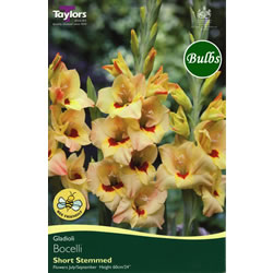 Image for Gladioli Bulbs