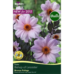 Small Image of Bishop of Leicester Dark Bronze Foliage Dahlia Tuber
