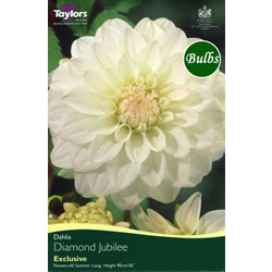 Image for Dahlia Bulbs