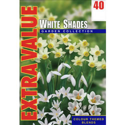 Small Image of White Shades - Mixed White Flower Bulbs