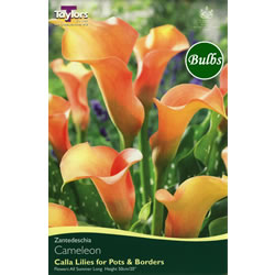 Image for Zantedeschia Bulbs