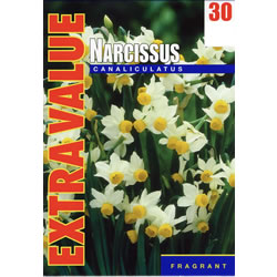 Small Image of Canaliculatus - Extra Value Daffodil Bulbs