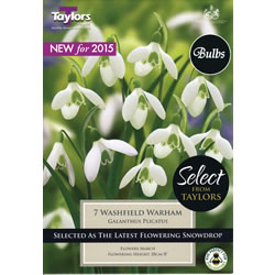 Image for Snowdrop Bulbs