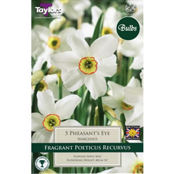 Small Image of Daffodil Pheasants Eye Bulbs - Poeticus