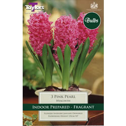 Small Image of Hyacinth Bulbs Pink Pearl (Fragrant)