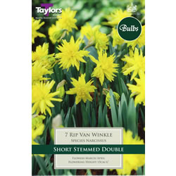 Small Image of Daffodil Rip Van Winkle Bulbs - Species Narcissi