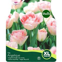 Small Image of Tulip Angelique Bulbs - XL Value Range