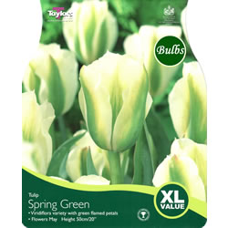 Small Image of Tulip Spring Green Bulbs - XL Value Range