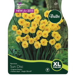 Small Image of Narcissi Sun Disc Bulbs - XL Value Range