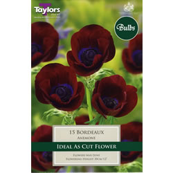 Image for Anemone Bulbs