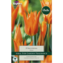 Small Image of Ballerina - Lily Flowered Tulip Bulbs