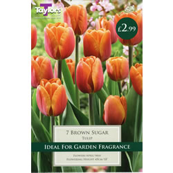 Small Image of Brown Sugar - Cottage Garden Tulip Bulb