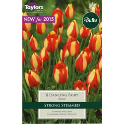 Small Image of Dancing Fairy Tulip Bulb