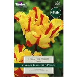 Small Image of Flaming Parrot - Parrot Tulip Bulbs