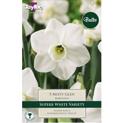 Small Image of Daffodil Misty Glen Bulbs - Trumpets and Cups Variety