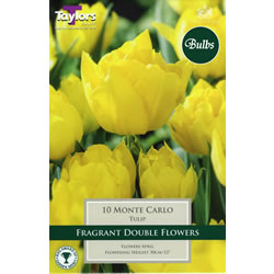 Small Image of Monte Carlo - Double Early Tulip Bulbs