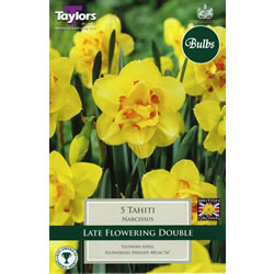 Small Image of Daffodil Tahiti Bulbs - Doubles
