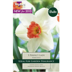 Small Image of Daffodil Perfect Lady Bulbs - Trumpets and Cups Variety