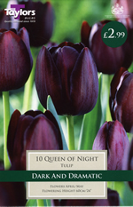Queen of the Night - Cottage Garden Tulip Bulb