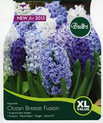 Small Image of Hyacinth Ocean Breeze Fusion - Xtra Large Value Range