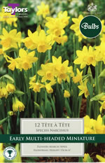 Daffodil Tete A Tete Bulbs - Species Narcissi