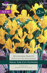 Small Image of Golden Beauty - Iris Bulb
