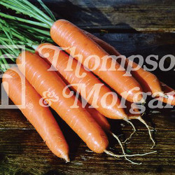 Image of Thompson and Morgan Carrot - Eskimo F1 Hybrid
