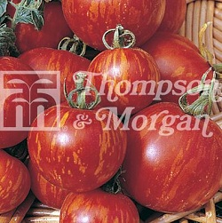 Image of Seeds for Kids - Tomato Tigerella