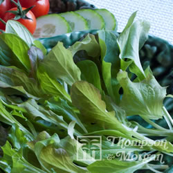 Image of Thompson and Morgan Salad Leaves : Mesclun Mixed Finished Packet