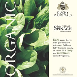 Image of Duchy Originals Palco F1 Hybrid Spinach Seeds
