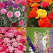 Small Image of Thompson and Morgan Easy Annuals Collection Seeds