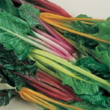 Image of T&Ms Heritage Collection Five Colour Silverbeet Swiss Chard Seeds